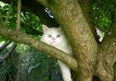 enki dans l arbre