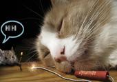 Puzzle le chat et la souris