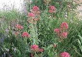 Jolie harmonie florale