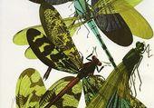 aquarelle insectes verts