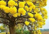 cet arbre est