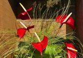 Composition florale en rouge et vert