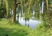bord du plan d eau