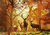 Deer - La harde