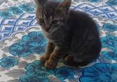 Puzzle petit chaton