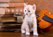 chaton violon vieux bouquins