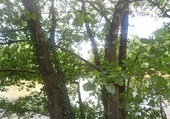 arbre en transparence