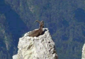 un grimpeur
