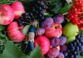 Belle grappe de fruits