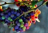 Raisins de toute les couleurs