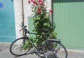 vélo et roses