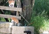 3 Chatons en Grèce