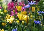 Au ras des fleurs