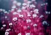tapis de petites fleurs
