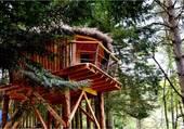 cabane myrtille