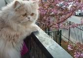 Mia au balcon