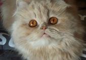 Mia aux yeux d'or