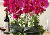 belle coupe d'orchidées