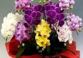 pots d'orchidées mulyicolores