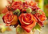 belles roses orangées