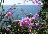 fleurs au bord de la mer