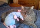 Ratatouille et Nounourse font ami ami.