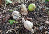 escargots, une rencontre