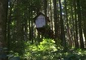 Petite maison dans la forêt