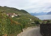 Le Dézaley/Lavaux/Vaud/Suisse