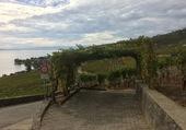 Dans le vignoble Lavaux/VD/Suisse
