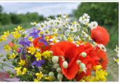 Bouquet fleurs des champs