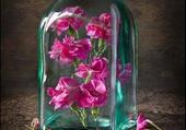 petales de fleurs dans une bouteille
