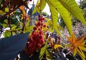 Fleurs sur les quais de l'Odet