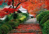 Automne au Japon