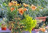 Fleurs variées