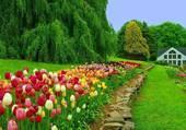 Les tulipes du printemps