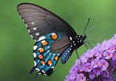 Superbe papillon exotique