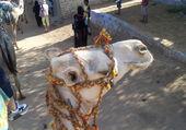BALADE EN EGYPTE