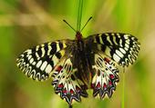 Encore une superbe papillon
