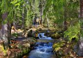 Forêt enchantée allemande