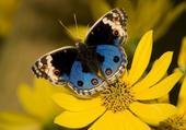 Un bien beau papillon