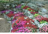 Rocaille fleurie