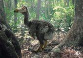 Puzzle le dodo