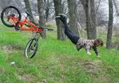 Nouveau biathlon (vélo + plongeon)