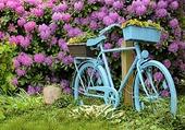 Profusion de rododendron