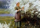Fleurs de printemps, D. R. Knight