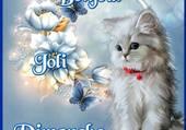 joli chaton blanc