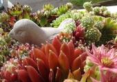 Les fleurs de jobardes