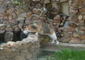CHATTE CURIEUSE