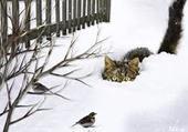 ATTENTION AU....CAT